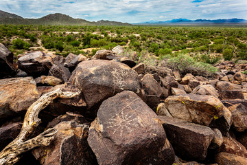 Ancient native petroglyphs adorn the desert varnish on the boulders of Signal Hill in Saguaro National Park West near Tucson, AZ.