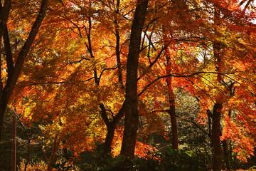 光が射し込む紅葉した森林