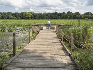 Senior man on pier overlooking lake covered in lilypads