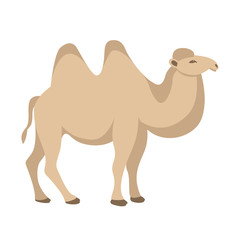 camel vector illustration style flat
