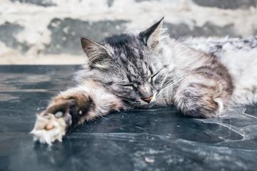 Gray cat sleep on the dirty surface