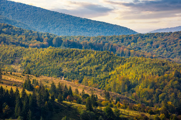 hills of mountain range with forest in autumn