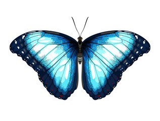 Single detailed Blue Butterfly morpho on a white background.