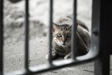 Cat behind railing seeming afraid of human