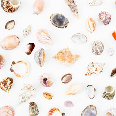 Natural pattern with tropical sea shells on white background. Flat lay. Top view. Ocean background