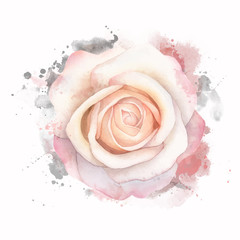 Abstract watercolor rose on white background. Watercolor grunge painting illustration