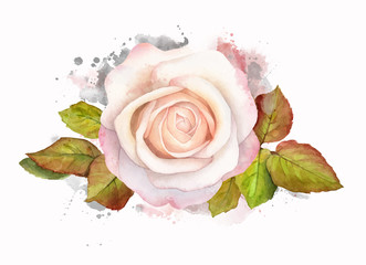 Abstract watercolor rose with leaves on white background. Watercolor painting grunge illustration