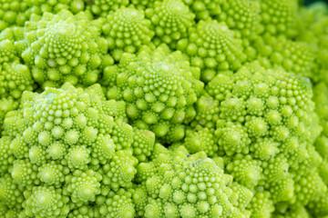 Broccolo romanesco with white background