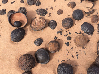 Moqui Marbles (grand staircase national monument, USA)