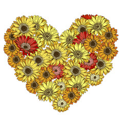 Heart of red and yellow daisies flowers isolated on white background.  illustration.