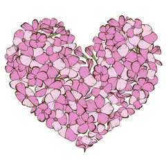 Heart of gently pink phlox flowers isolated on white background.  illustration.