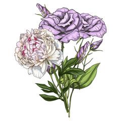 Hand drawn bouquet of eustoma and peony flowers isolated on white background. Botanical  illustration.