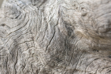 Old weathered wood background. Low DOF