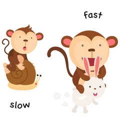 Opposite slow and fast illustration