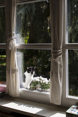 Black and white cat sitting on sunny windowsill close to flowerpot
