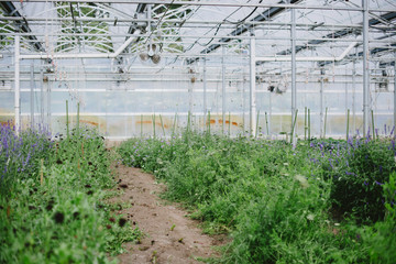 Greenhouse full of plants and vegetables