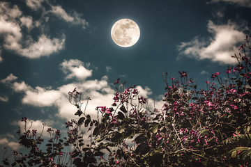 Wall Mural - Colorful flowers blooming against night sky and clouds with bright full moon.