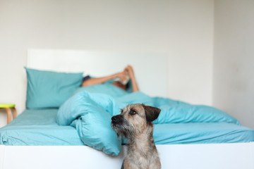 Cute dog sitting next to the bed - horizontal