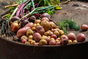 Vegetables, crops, potatoes, beets, onions, garlic, dill, greens, a lot, Fresh, organic, natural, farm, country, early, collect, morning, Grow, seedling, leaves, fruit, juicy, diet, plants Seasonal,