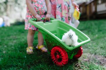 Girls carrying bird in wheelbarrow while standing in yard