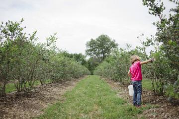 Full length of girl picking blueberries at farm against sky