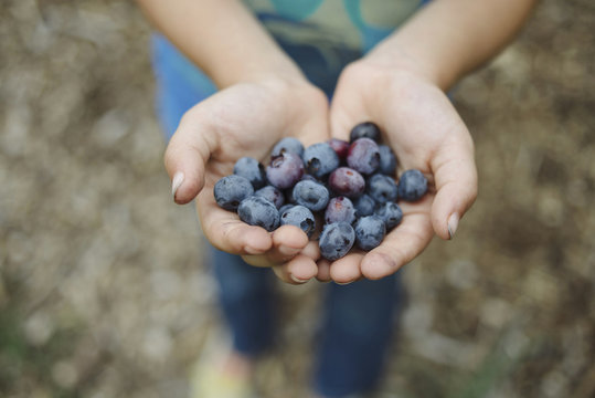 Close up of girl holding blueberries on farm