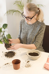 High angle view of businesswoman making houseplant at desk in creative office
