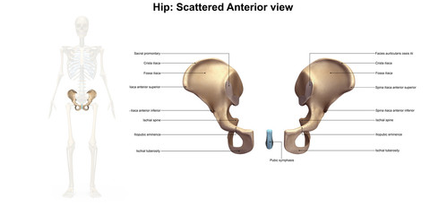 Hip_Scatter_Anterior view
