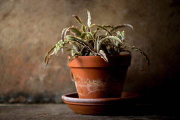 Potted Cactus Plant in Clay Pot