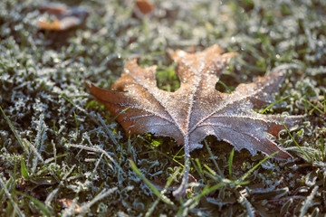 Leaf with Frost on the Grass