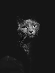 Cat Portraits in a sliver or hard light