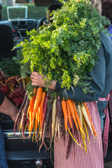 woman holding a large bunch of heirloom organic carrots