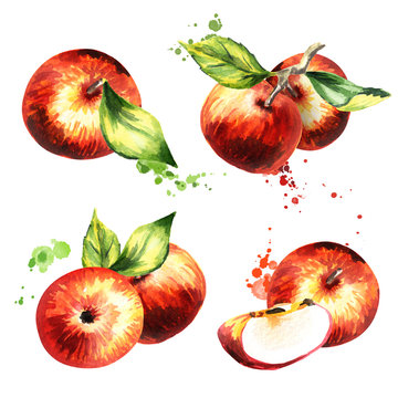 Apple compositions set. Hand-drawn watercolor illustration
