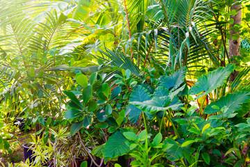 Close up image of beautiful tropical garden with palm, calathea, strelitzia.