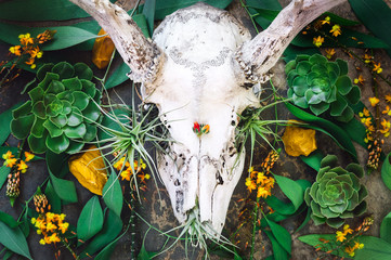 Deer Skull with Succulents, Eucalyptus and Airplants