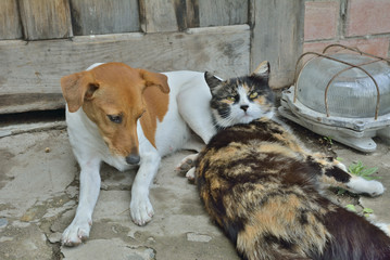Dog and cat 1