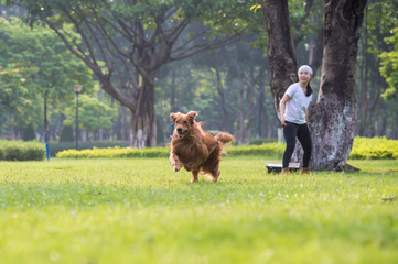 Girl and Golden Retriever playing in the grass