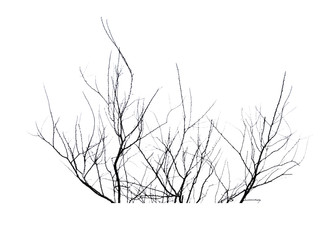 Silhouette dead tree isolated on white background for halloween or scary.with clipping path.