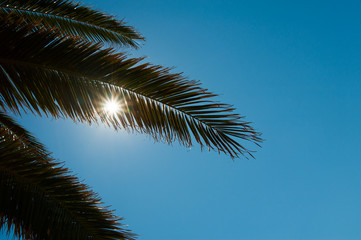 palm leaves in backlight
