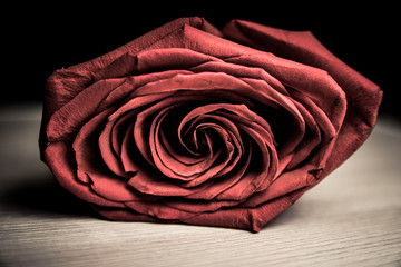 Red rose of love on a black background