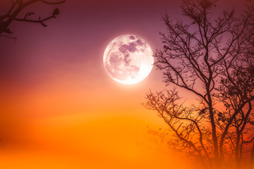 Fototapete - Landscape of colorful sky, foggy is swinging between dry tree and moon.