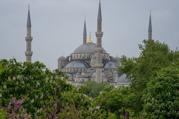 The Blue Mosque in spring (Istanbul)