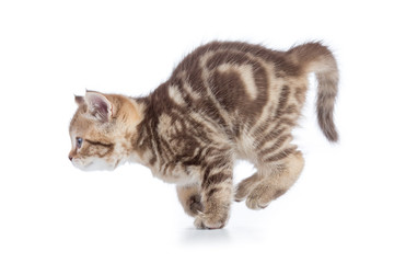 Papier Peint - Active running young cat side view isolated