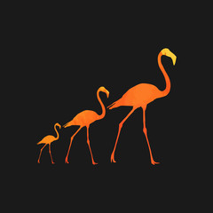 illustration flamingo