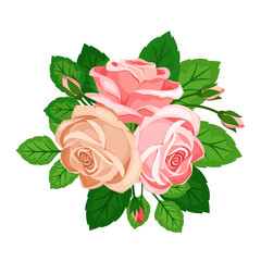 Beautiful pink roses with buds on white background