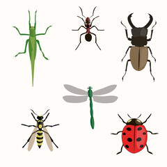 insects set. Illustration on a white background.
