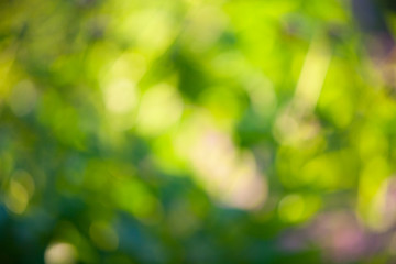 Beautiful blurred green background leaf  of trees