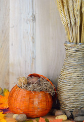 Fall still life with natural textures including a pumpkin shaped straw basket and nuts with wooden background lit from side