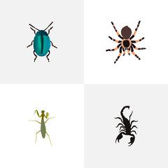 Realistic Poisonous, Grasshopper, Tarantula And Other Vector Elements. Set Of Bug Realistic Symbols Also Includes Locust, Mantis, Spider Objects.