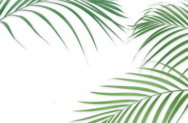 Tropical palm leaves on white background. Minimal nature. Summer Styled.  Flat lay. Image is approximately 5500 x 3600 pixels in size